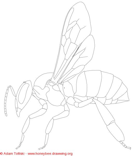 honey bee worker