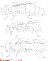 honey bee, queen, worker, drone