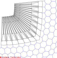 Section of compound eye